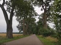 Dąb szypułkowy (Quercus robur) : 20.08.2017 - Widok w kierunku Sztynortu