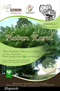 Platan klonolistny (Platanus x hispanica 'Acerifolia') : Tablica informacyjna pod platanem