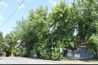 Klon srebrzysty (Acer saccharinum) : Od 1 do 5 (oraz fragment 6) - 1 lipca 2010